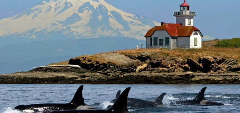 whale-watching-san-juan-islands