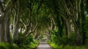 dark-hedges-northern-ireland